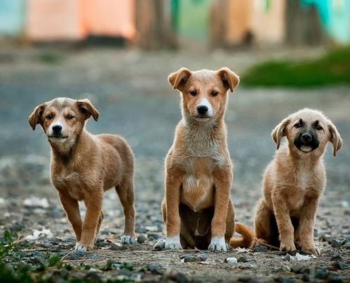 Daños causados por animales de compañía