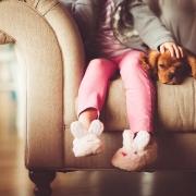 animales y divorcio