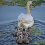 Puedo diferenciar entre mis hijos en el testamento - Vilches Abogados Madrid